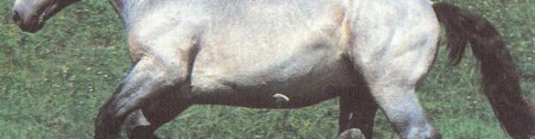 Лошади породы Пуату