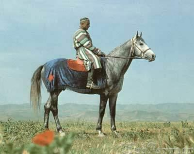 Лошадь породы карабаир, фото