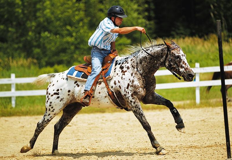 Лошадь породы колорадо рейнджер с наездником, фото