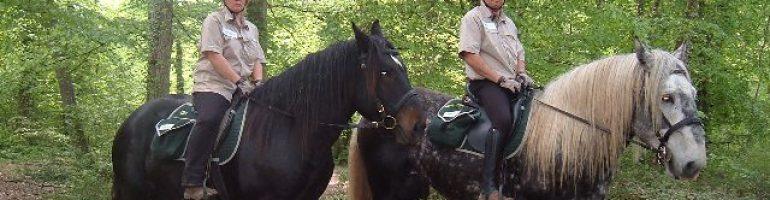 Лошади породы Пойтеве (муласье)