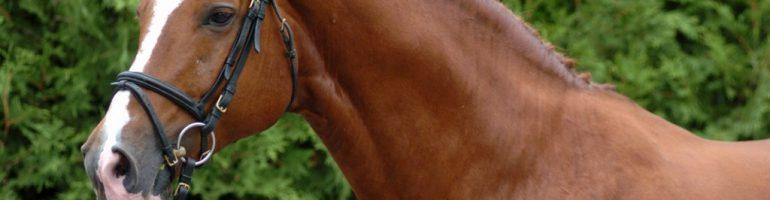 Лошади породы фуриозо-нортстар