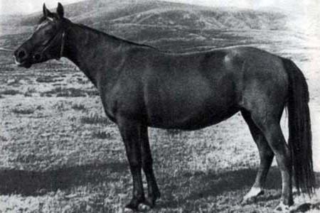 Новокиргизская лошадь, фото