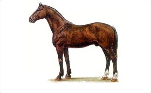 Новокиргизская порода лошади, фото