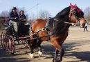 Пинцгауская лошадь (Норикийская лошадь, Норикер)