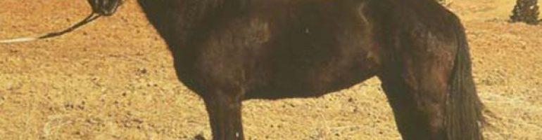 Пиндос или тесальская лошадь
