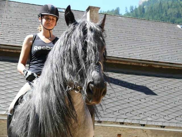 Пинцгауская лошадь с наездницей, фото