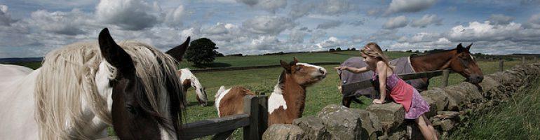 Чем отличается пони от лошади?