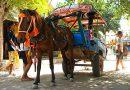 Пони породы Бали