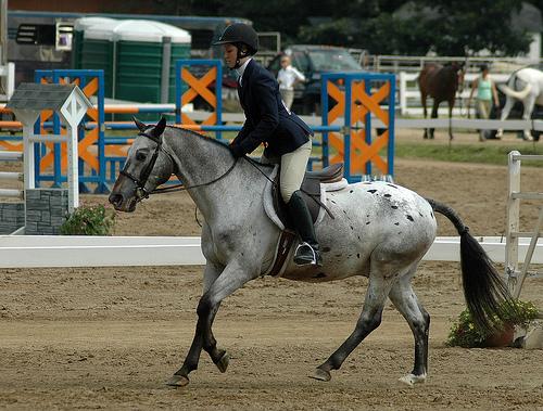 Порода пони Велара, фото