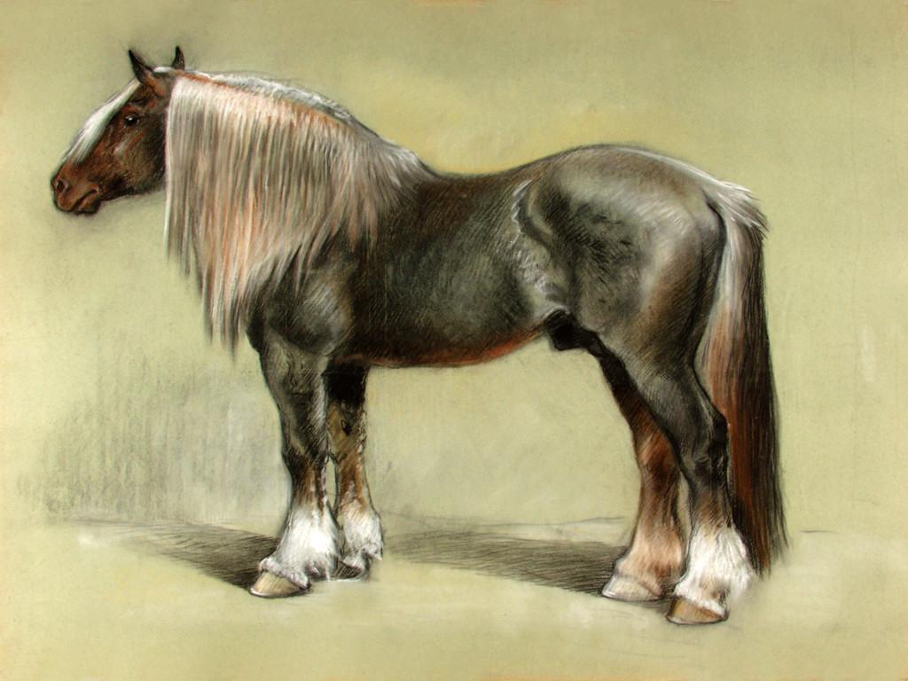 Рисунок русского Битюга, фото