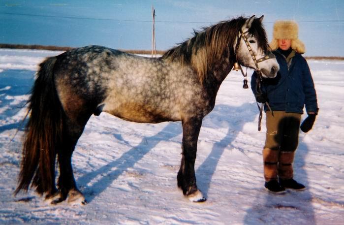Своеобразная Кузнецкая лошадь, фото