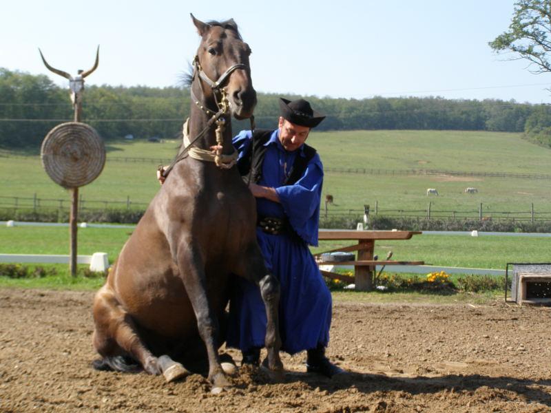 Венгерская теплокровная лошадь, фото