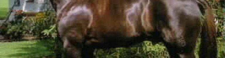 Вюртеммбургская теплокровная порода лошади