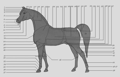 Стать лошади, фото
