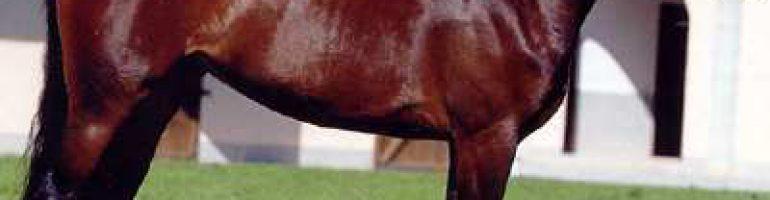Лошади породы мареммано