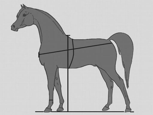 Взвешивание лошади, фото