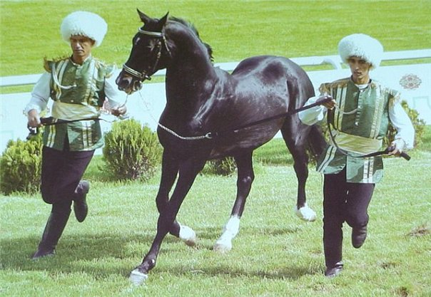 Упряжная лошадь породы карабаир, фото