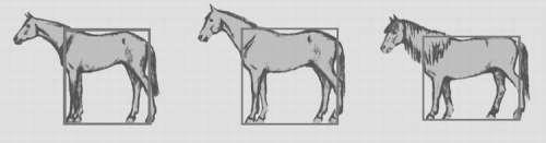 Формат лошади, фото