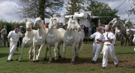 Четыре пони Бардиджано, фото