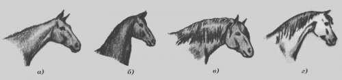 Шеи лошади, фото