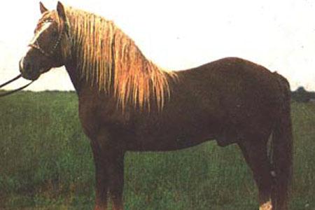 Южно-германская (немецкая) тяжелоупряжная лошадь, фото