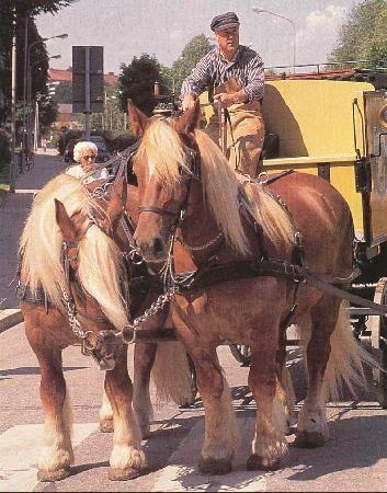 Ютландская лошадь с повозкой, фото