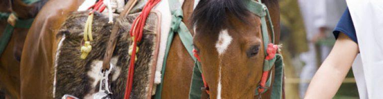 Японские аборигенные лошади