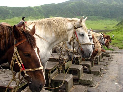 Японские аборигенные лошади, фото