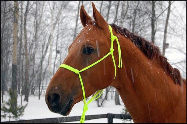Уздечка с веревок только для слишком спокойных лошадей