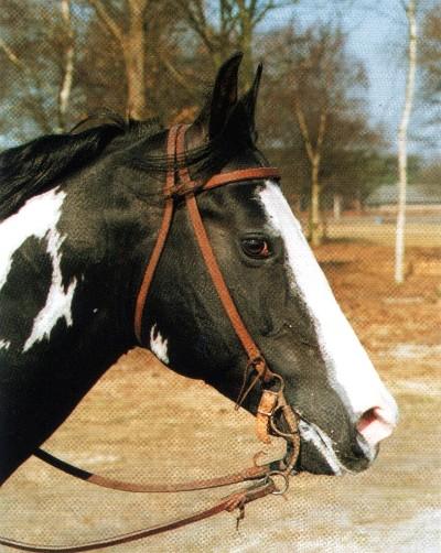 Ковбойская уздечка - выполнена из достаточно тонких ремешков