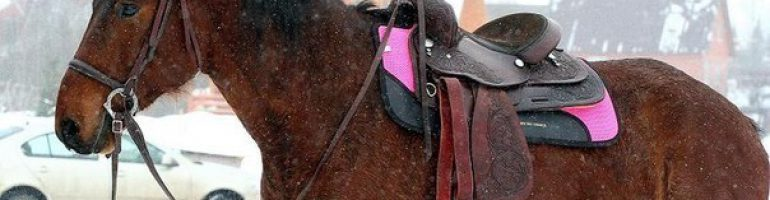 Кратко об амуниции лошади
