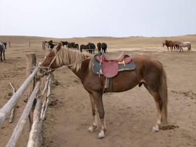 В случае пребывания всадника на спине лошади без седла, вес, что обременяет животного, приходится на седалищные кости