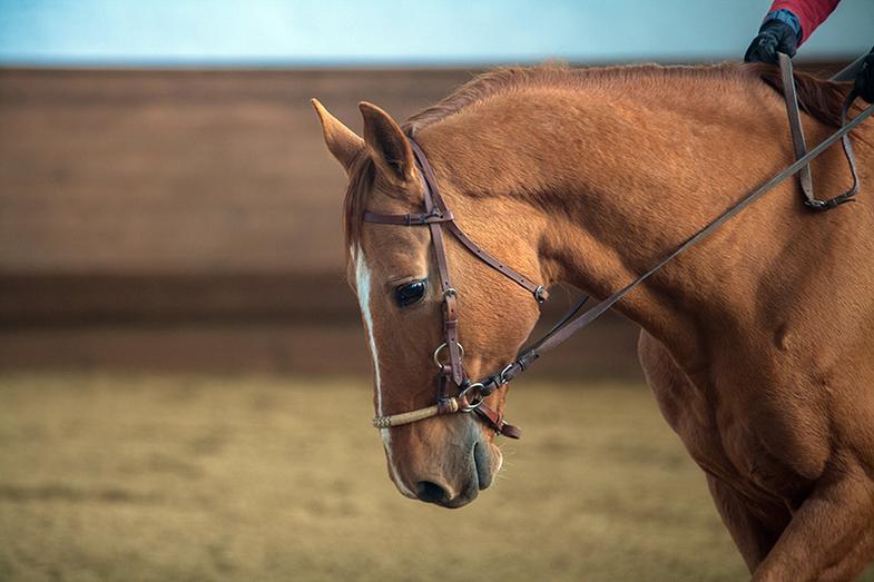 сайд-пул применяют к молодым лошадям