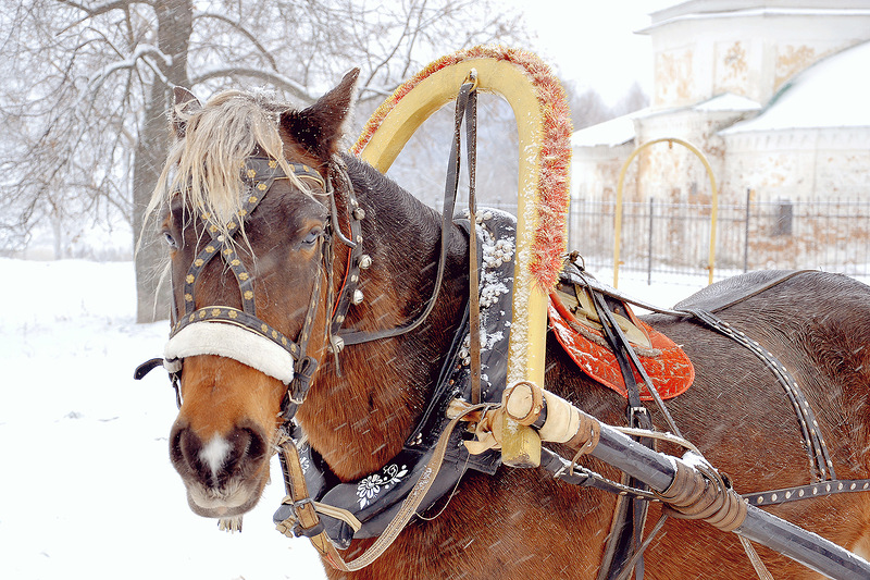 тяговое усилие лошади из хомута передается на повозку или орудие