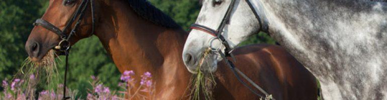 Проводящие отделы пищеварительной системы лошади. Глотка и пищевод