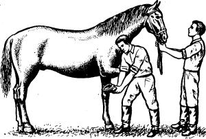 Лошади поднимают копыто