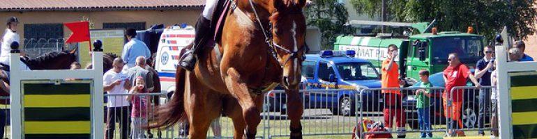Дыхание конкурной лошади