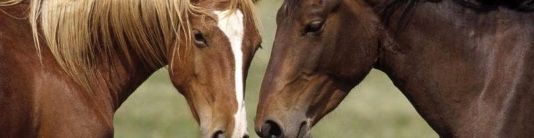 Мышцы шеи лошади
