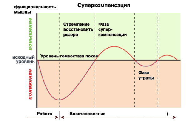 Причины эффекта суперкомпенсации и сверхвосстановления