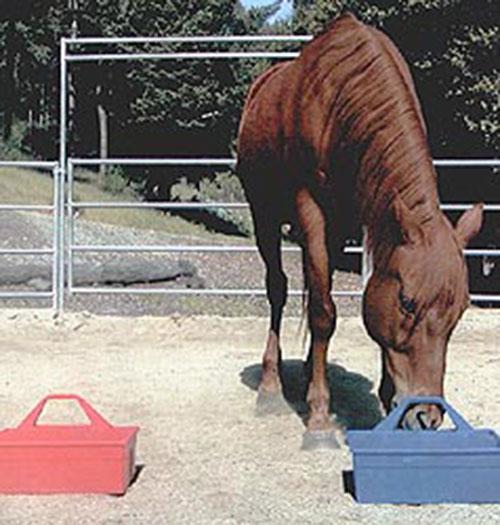 Различает ли цвета лошадь?