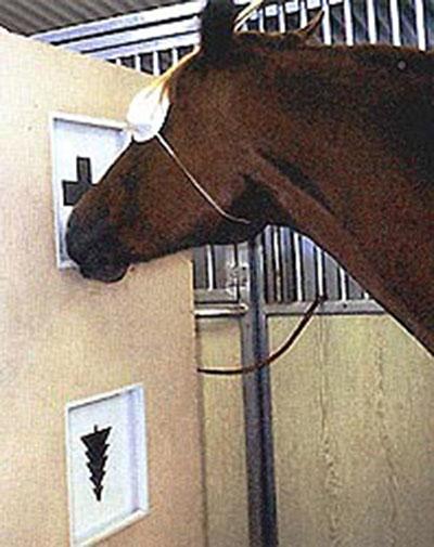Способна ли лошадь опознавать перевёрнутые предметы?