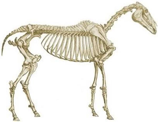 Что такое костная ткань. Как она формируется. Какое она имеет строение. Типы костной ткани. Строение кости с точки зрения биохимика, анатома, гистолога