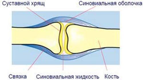 Строение кости с точки зрения анатома
