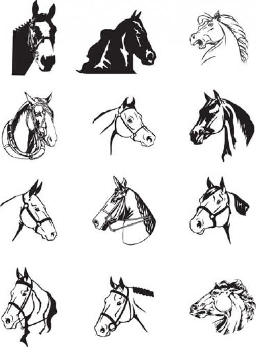 Морфология лошади и ее влияние на способности животного