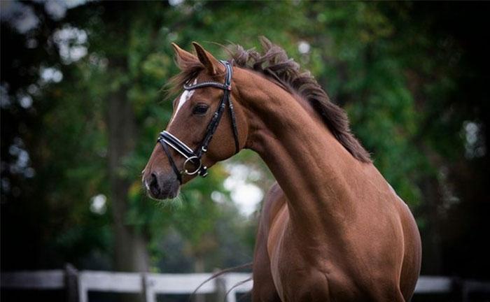 Оценка особенностей шеи лошади