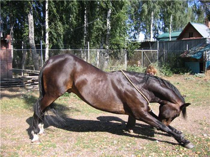 Внешняя специфика холки лошади