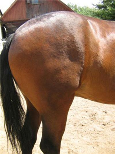 Чем важен круп лошади