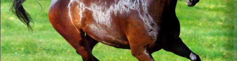 Экстерьер и строение лошади