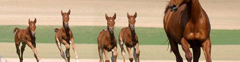 Система органов движения (мускулатура) лошади