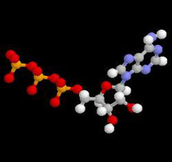 Креатинфосфорная кислота